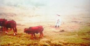 Sabine Wild: Vietnam_1365, 2012
